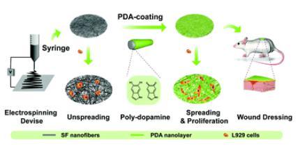 Biomater. Sci.:丝素膜聚多巴胺修饰能显著促进其创面愈合