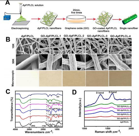 ACS Biomater. Sci. Eng.:氧化石墨纳米纤维支架用于促进周围神经再生